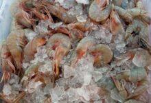 Photo of SENASA e INCOPESCA aclaran que se puede consumir y comercializar pescado y crustáceos